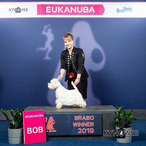 BEST_OF_BREED_535_LR_ANTWERPEN_2019_KYNO