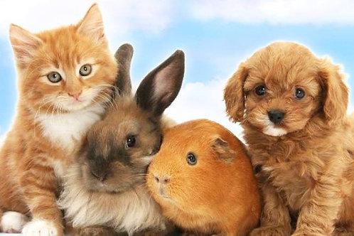 Animal healing session