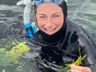 Our community-led Seagrass restoration has started!