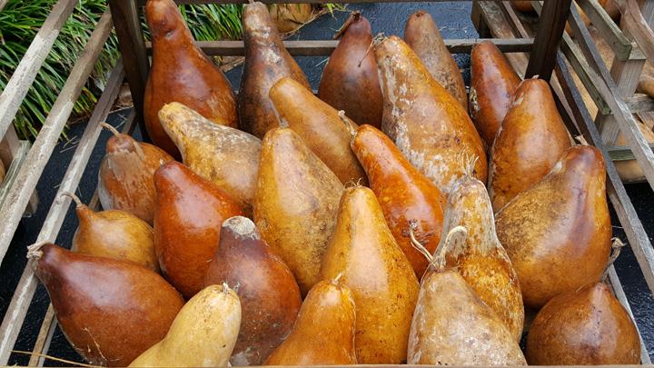 Blank Jug Gourds