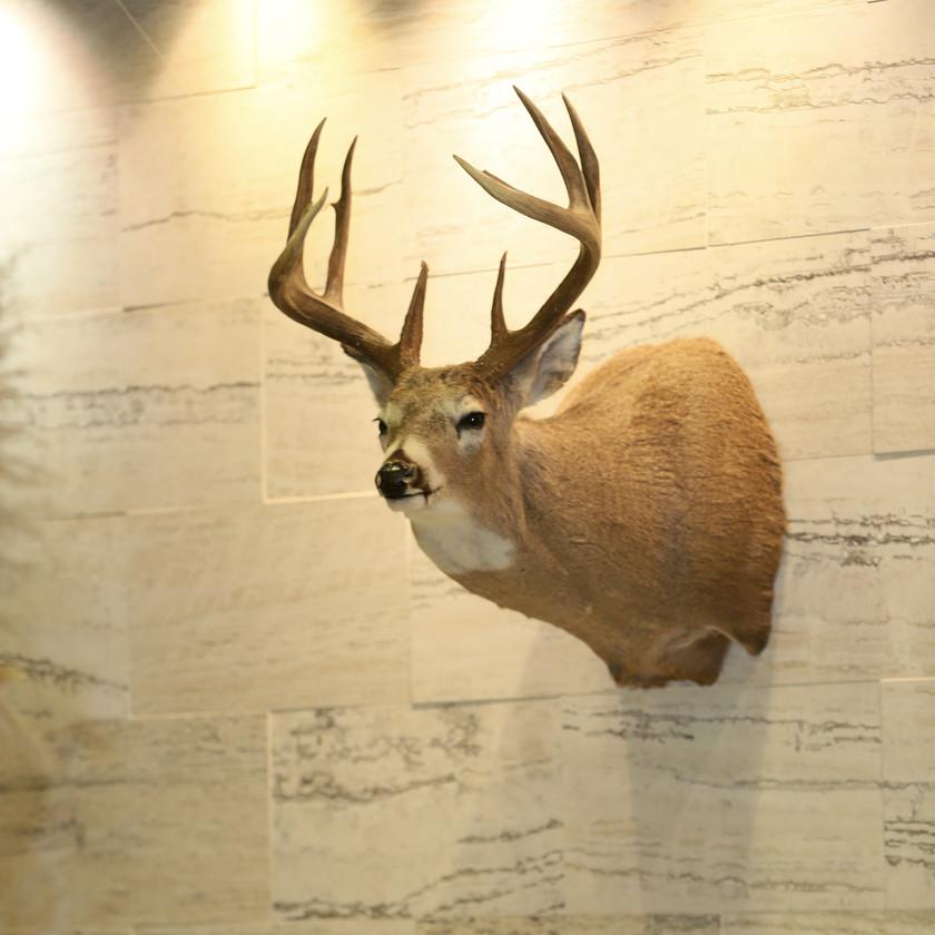 Bohemian Colorado Mountain Wedding. Antlers and Deer Head.