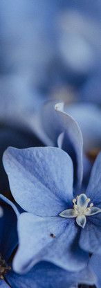 macro-nature-fleurs-jardin-51.jpg