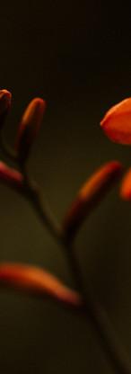 macro-nature-fleurs-jardin-83.jpg