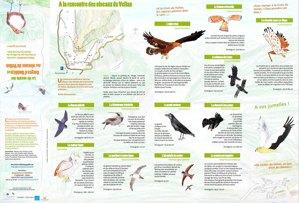 A la rencontre des oiseaux du Vellan - Association LYSANDRA