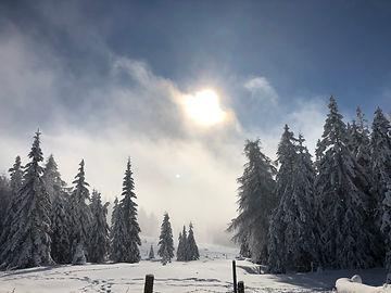 Winterwald mit sonne.jpg