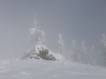 Winter Stein Bäume Nebel.jpg