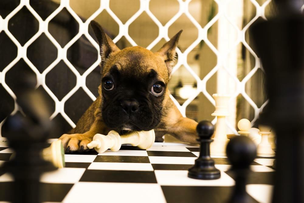 Checkmate, good game.