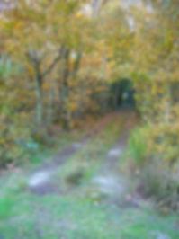 Chemin.jpg