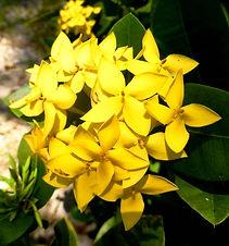 Fleur de Bach.jpg