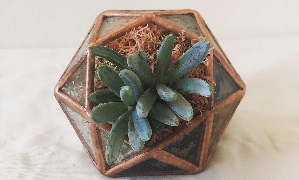 Succulent Jewel