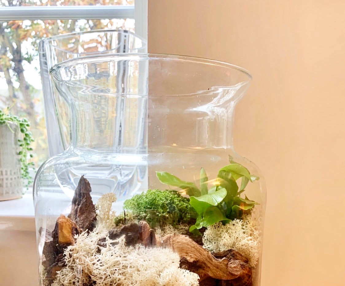 Medium moss terrarium kit