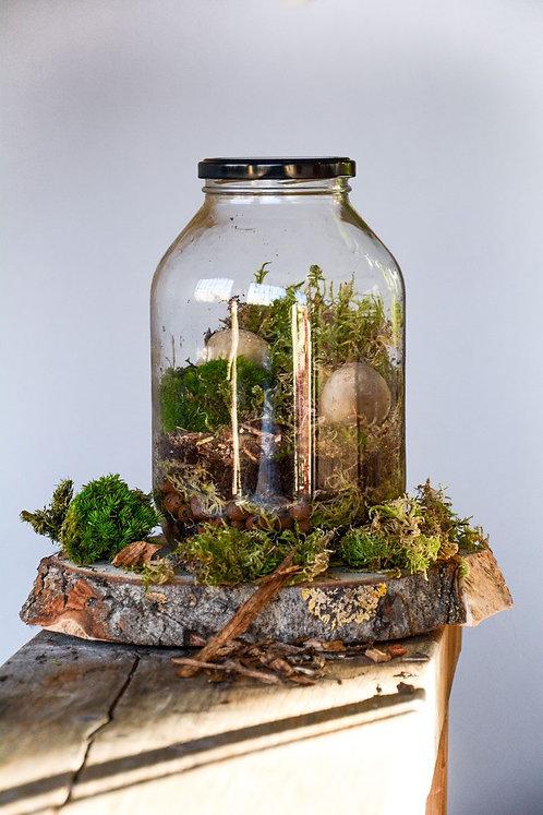 DIY Terrarium Kit in a Jar