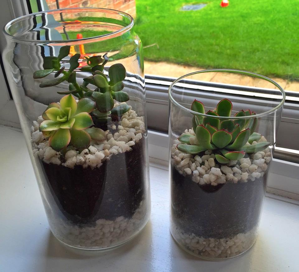 claire succulents.jpg