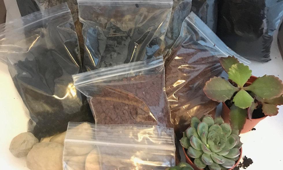 (Medium) Succulent Terrarium Kit