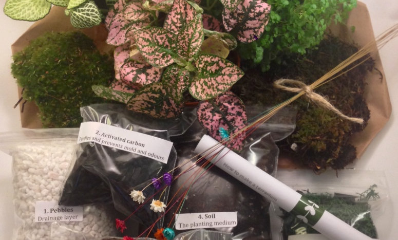 (Large) Closed Terrarium Kit with Plants