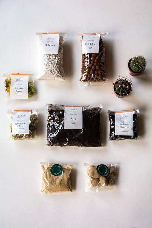 (Small) Cactus Terrarium Kit