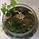 Thumbnail: (Medium) Moss Terrarium Starter Kit