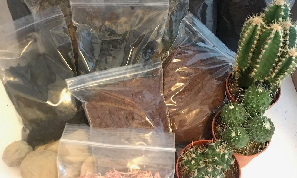 (Large) Cactus Terrarium Kit