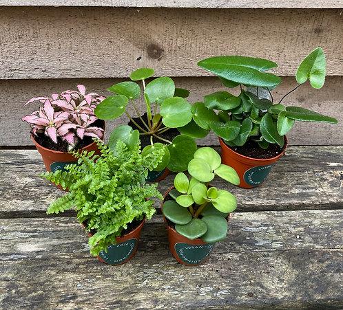 Assortment of Terrarium Plants
