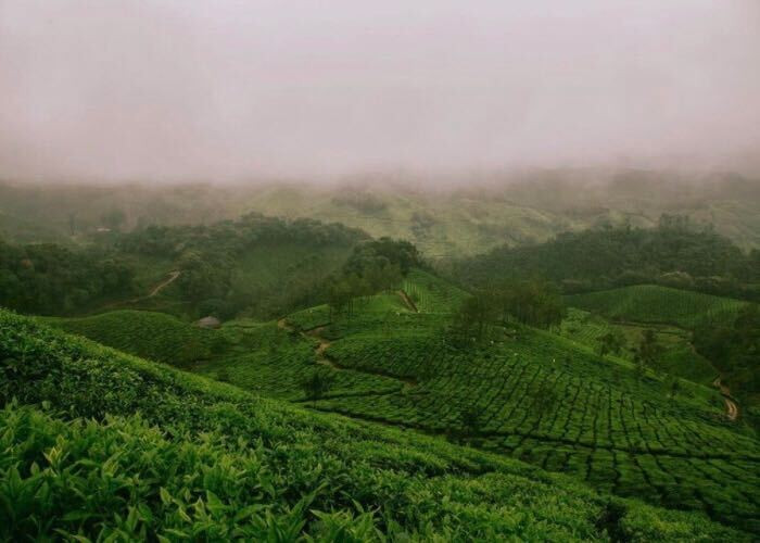 Tea estates and plantations