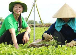 Founder Nguyễn Ngọc Hương kể về hành trình mang rau má Việt bán cho cả châu Âu: Chuẩn bị vùng trồng