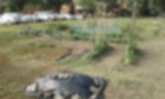 The Garden Project Regina 2018.jpg
