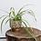 cachepot-gres-plante