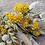 fleurs-jaunes-sechees