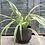 plante-poterie-gres