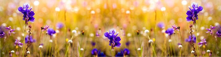 Frühling.jpg