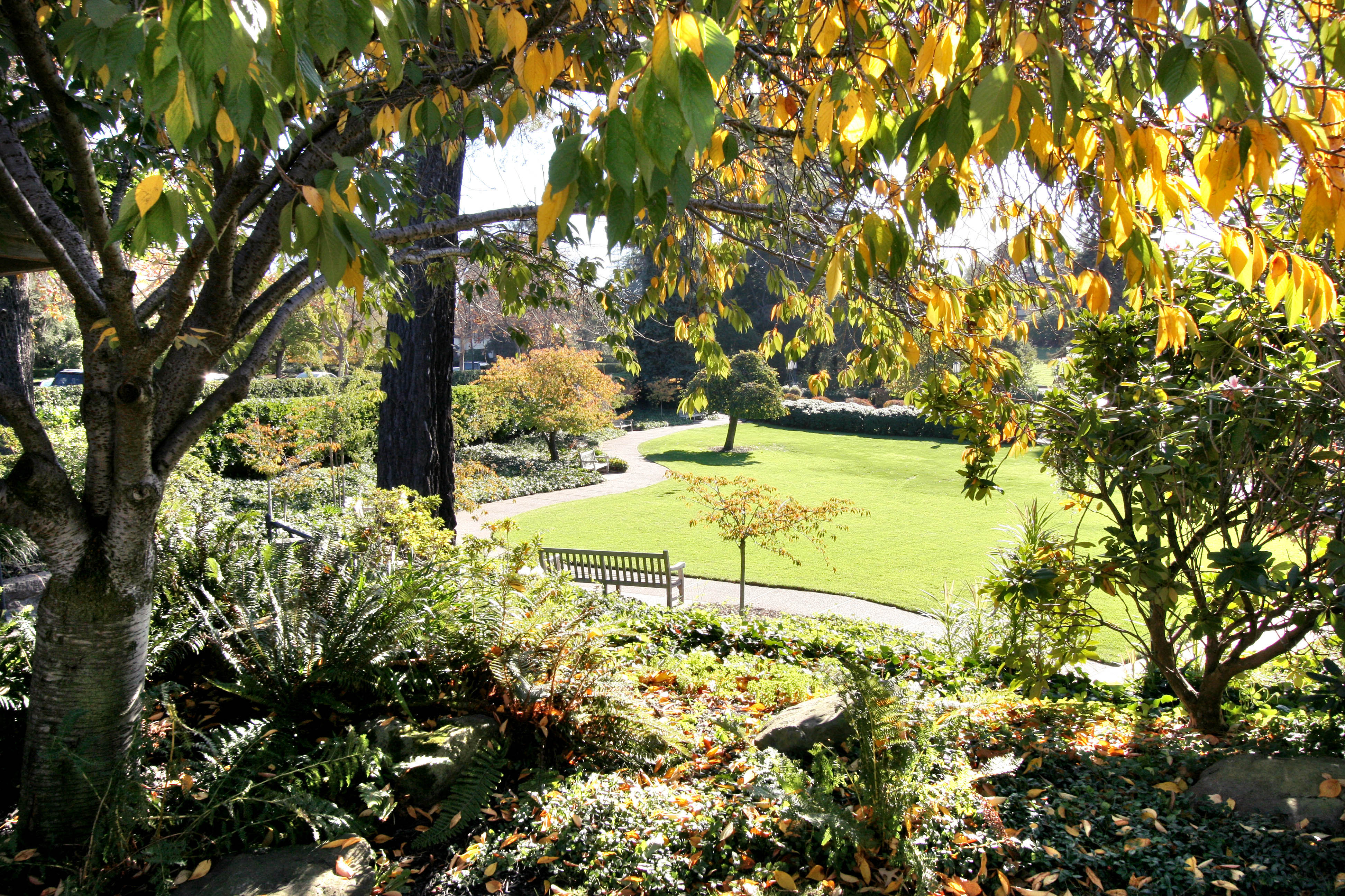 Piedmont Park detail