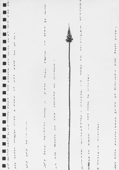dandelions-13-1.jpg