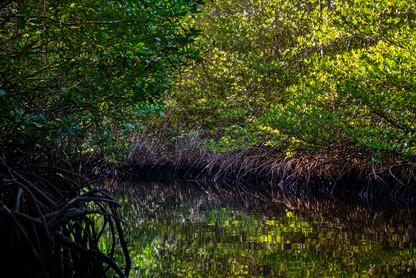 mangrove-forest-nusa-lembongan-indonesia