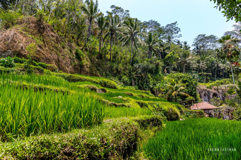 tegallalang-rice-fields-ubud-indonesia-a