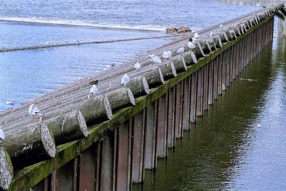 ice-guard-river-vltava-birds-czech-repub