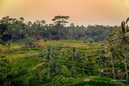 sunset-tegallalang-rice-terraces-ubud-ba