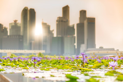 lily-pads-sunset-science-museum-city-bac