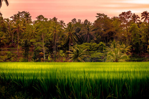 sunset-tegallalang-rice-terraces-long-gr