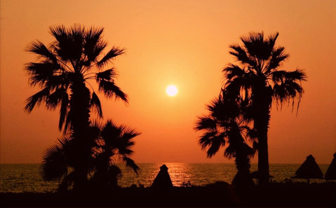 tropical-palm-trees-sunset-silhouette-se