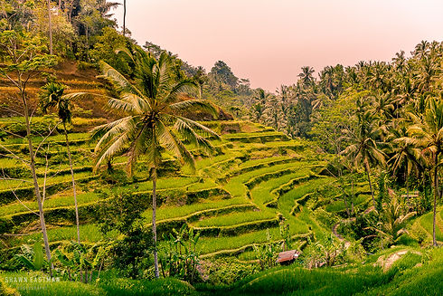 Landscape photograph of sunset at Tegalalang rice terrace in Ubud, Bali, Indonesia