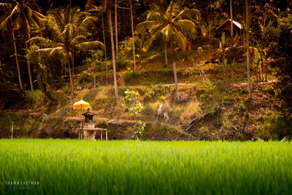 sunset-shrine-tegallalang-rice-fields-ub