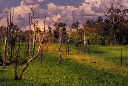 amazon-rainforest-brazil-south-america-s