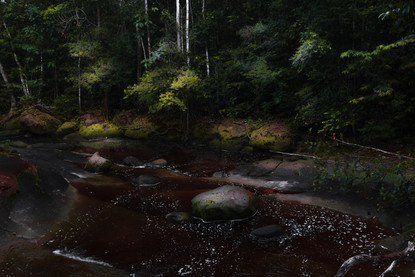 dark-amazon-river-rainforest-presidente-