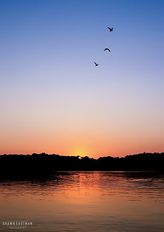 Landscape photograph of a sunset on Kentucky Lake in Paducah, Kentucky, USA with three birds flying off into the sky