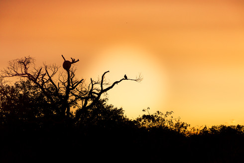 silhouette-exotic-tropical-bird-branch-s