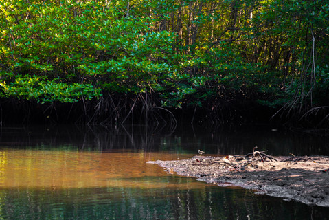 warm-sunray-mangrove-forest-river-tropic
