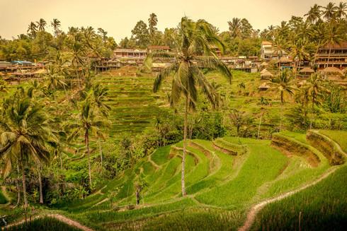 tegallalang-rice-paddies-foliage-ubud-ba