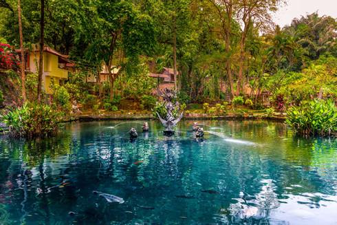 fish-koi-pond-blue-water-pura-gunung-kaw
