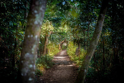pathway-leading-through-rainforest-singa