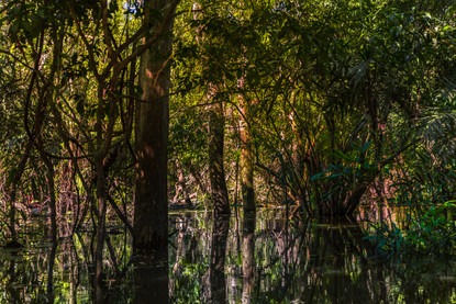 rainforest-trees-jungle-amazon-river-bra